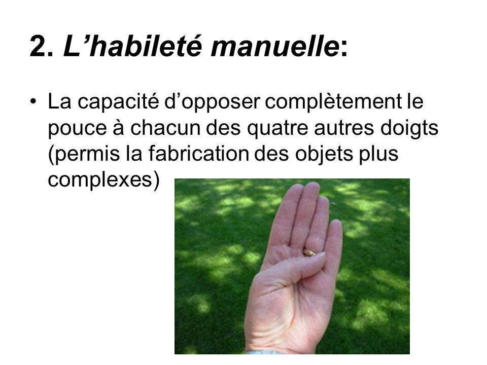 La capacité dopposer complètement le pouce à chacun des quatre autres doigts (permis la fabrication des objets plus complexes) 2. Lhabileté manuelle: