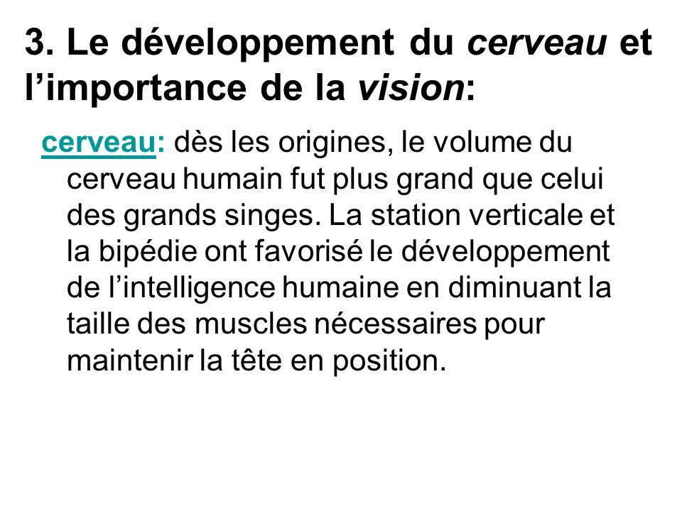 3. Le développement du cerveau et limportance de la vision: cerveau: dès les origines, le volume du cerveau humain fut plus grand que celui des grands