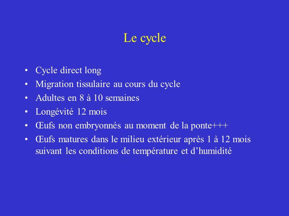 Le cycle Cycle direct long Migration tissulaire au cours du cycle Adultes en 8 à 10 semaines Longévité 12 mois Œufs non embryonnés au moment de la pon