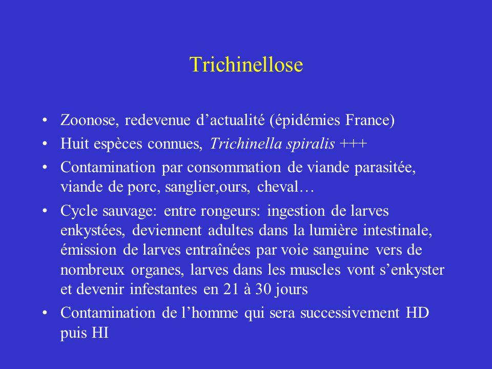 Trichinellose Zoonose, redevenue dactualité (épidémies France) Huit espèces connues, Trichinella spiralis +++ Contamination par consommation de viande