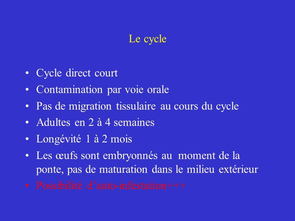 Le cycle Cycle direct long Migration tissulaire au cours du cycle Adultes en 8 à 10 semaines Longévité 12 mois Œufs non embryonnés au moment de la ponte+++ Œufs matures dans le milieu extérieur après 1 à 12 mois suivant les conditions de température et dhumidité