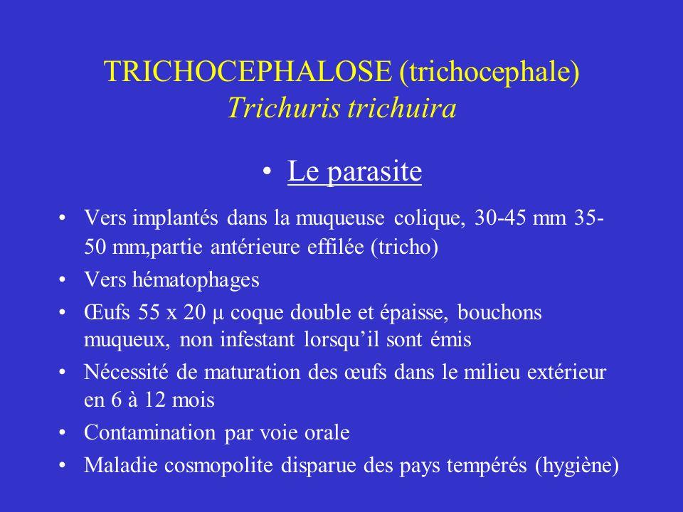 TRICHOCEPHALOSE (trichocephale) Trichuris trichuira Le parasite Vers implantés dans la muqueuse colique, 30-45 mm 35- 50 mm,partie antérieure effilée