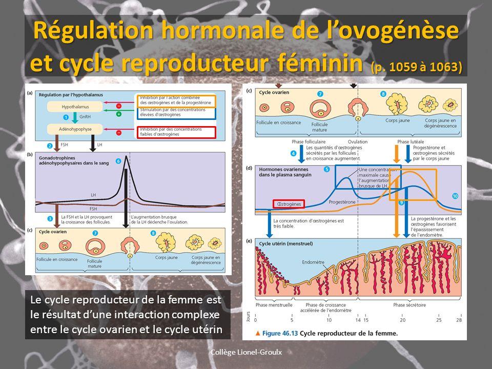 Régulation hormonale de lovogénèse et cycle reproducteur féminin (p. 1059 à 1063) Le cycle reproducteur de la femme est le résultat dune interaction c