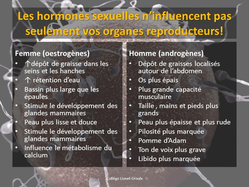 Les hormones sexuelles ninfluencent pas seulement vos organes reproducteurs! Femme (oestrogènes) dépôt de graisse dans les seins et les hanches rétent