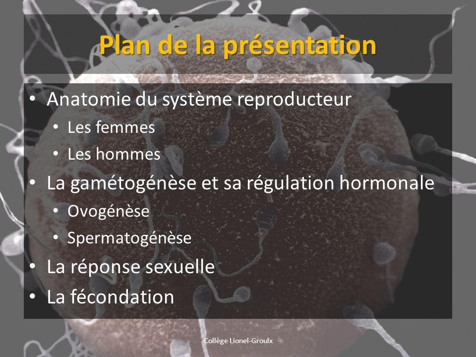 Plan de la présentation Anatomie du système reproducteur Les femmes Les hommes La gamétogénèse et sa régulation hormonale Ovogénèse Spermatogénèse La