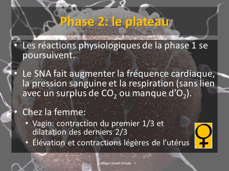 Phase 2: le plateau Les réactions physiologiques de la phase 1 se poursuivent. Le SNA fait augmenter la fréquence cardiaque, la pression sanguine et l