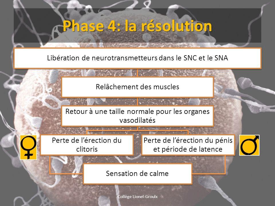 Phase 4: la résolution Libération de neurotransmetteurs dans le SNC et le SNA Relâchement des muscles Retour à une taille normale pour les organes vas