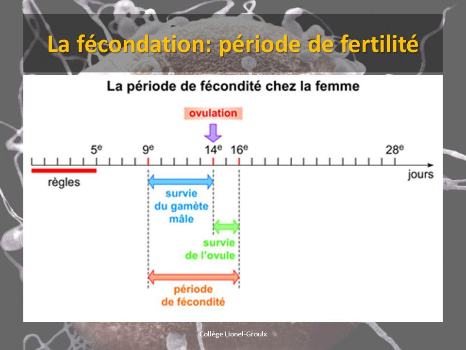 La fécondation: période de fertilité Collège Lionel-Groulx
