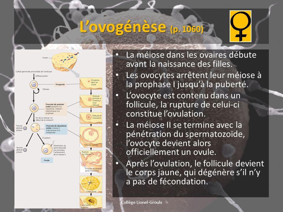 Lovogénèse (p. 1060) La méiose dans les ovaires débute avant la naissance des filles. Les ovocytes arrêtent leur méiose à la prophase I jusquà la pube