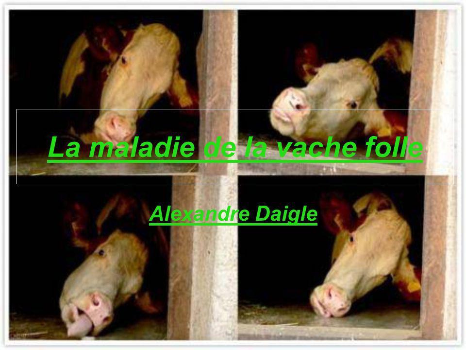 La maladie de la vache folle Alexandre Daigle