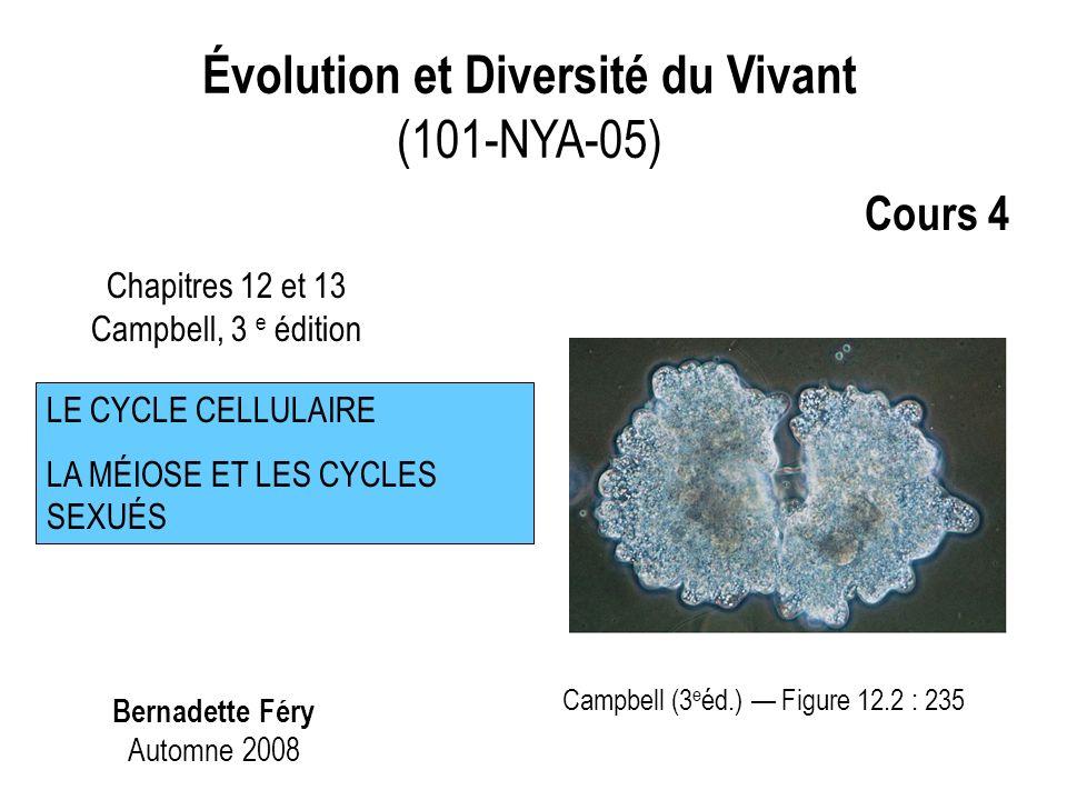 Évolution et Diversité du Vivant (101-NYA-05) Bernadette Féry Automne 2008 Chapitres 12 et 13 Campbell, 3 e édition LE CYCLE CELLULAIRE LA MÉIOSE ET LES CYCLES SEXUÉS Cours 4 Campbell (3 e éd.) Figure 12.2 : 235