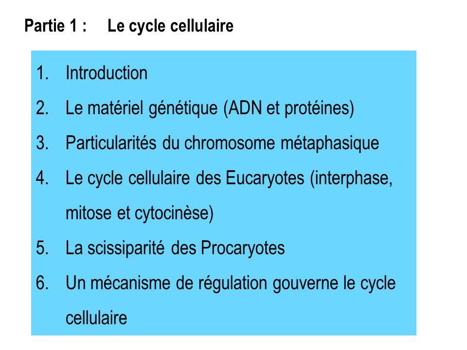1.Introduction 2.Le matériel génétique (ADN et protéines) 3.Particularités du chromosome métaphasique 4.Le cycle cellulaire des Eucaryotes (interphase