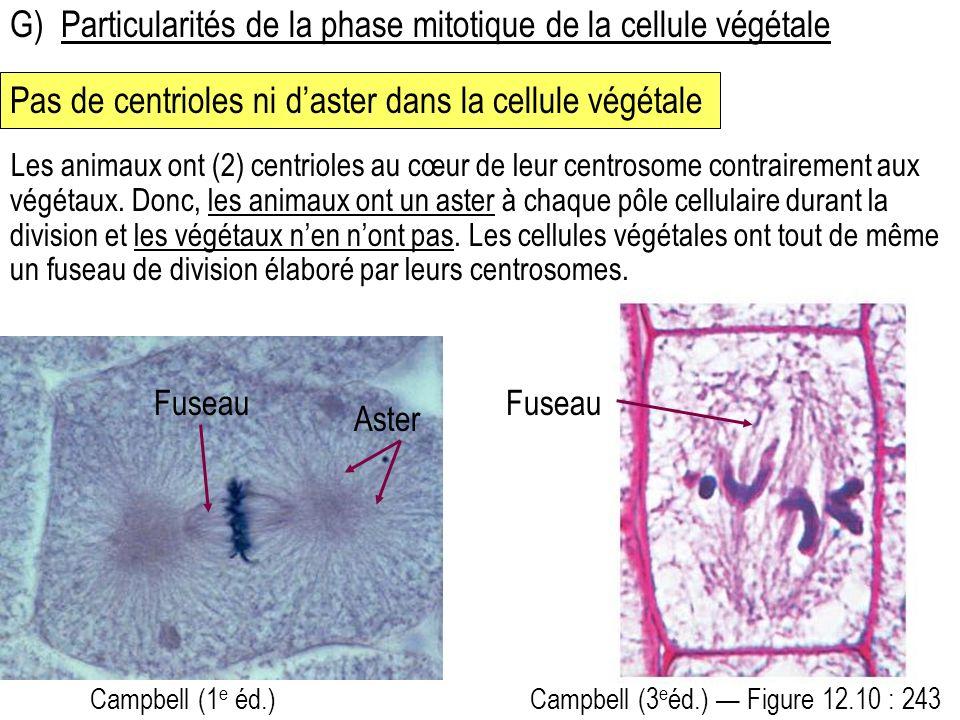 G)Particularités de la phase mitotique de la cellule végétale Pas de centrioles ni daster dans la cellule végétale Campbell (3 e éd.) Figure 12.10 : 243 Les animaux ont (2) centrioles au cœur de leur centrosome contrairement aux végétaux.