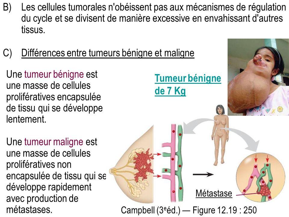 B)Les cellules tumorales n'obéissent pas aux mécanismes de régulation du cycle et se divisent de manière excessive en envahissant d'autres tissus. C)D