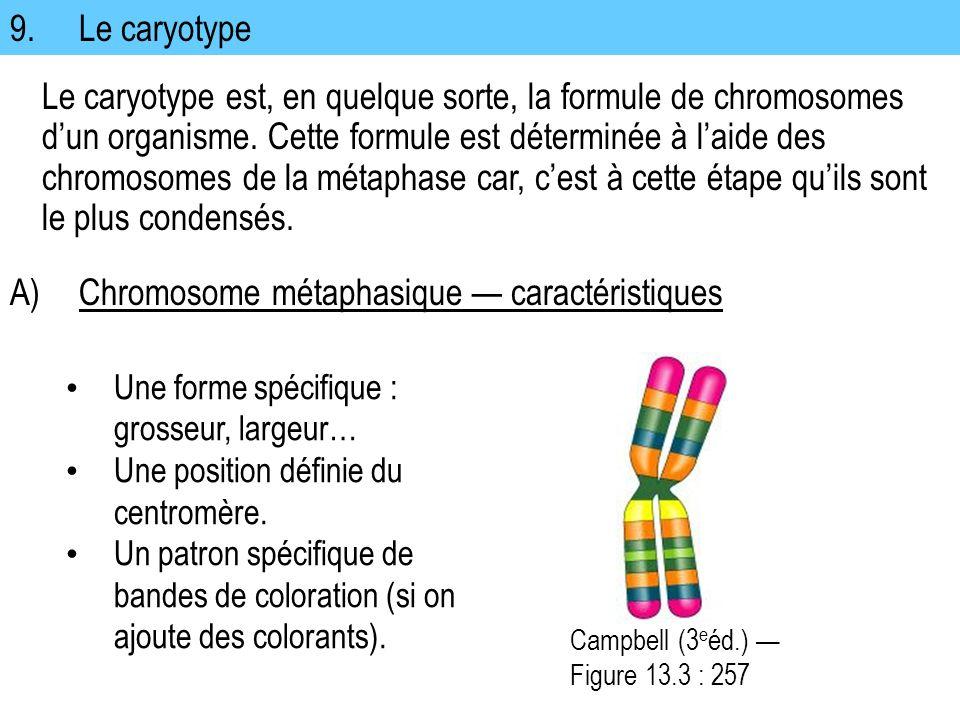 9.Le caryotype Le caryotype est, en quelque sorte, la formule de chromosomes dun organisme. Cette formule est déterminée à laide des chromosomes de la