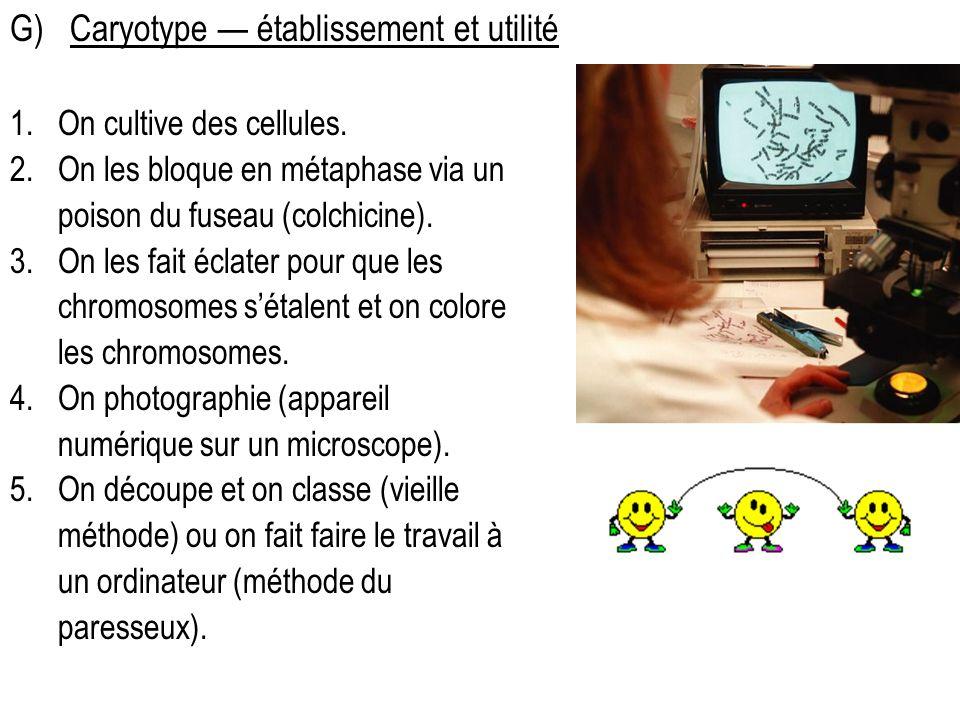 G)Caryotype établissement et utilité 1.On cultive des cellules. 2.On les bloque en métaphase via un poison du fuseau (colchicine). 3.On les fait éclat