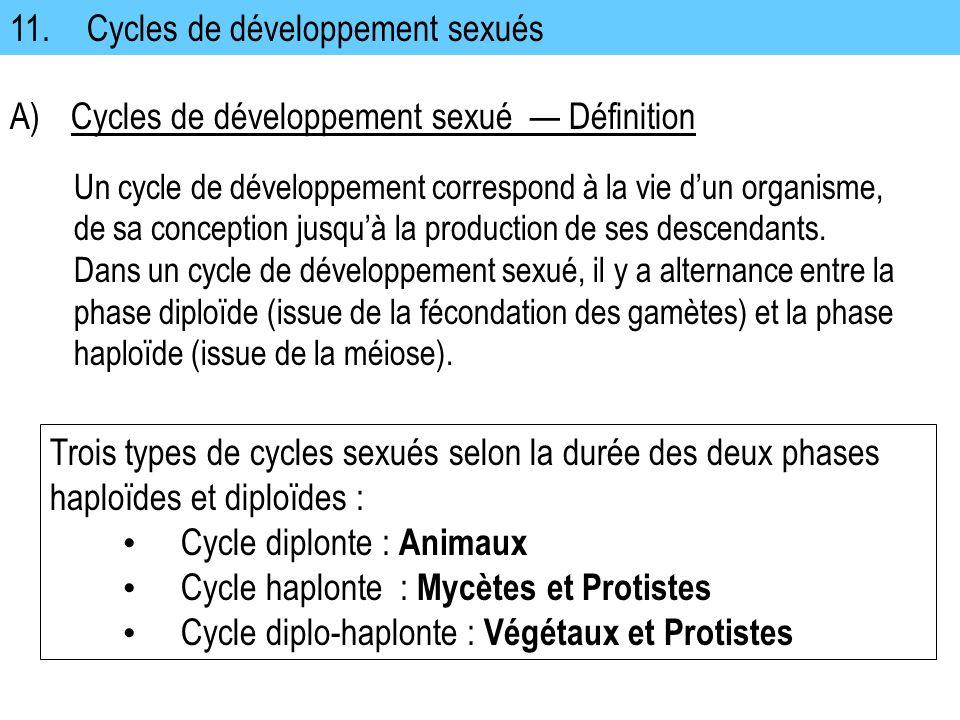 11. Cycles de développement sexués A)Cycles de développement sexué Définition Un cycle de développement correspond à la vie dun organisme, de sa conce