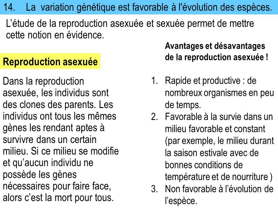 14.La variation génétique est favorable à l'évolution des espèces. Avantages et désavantages de la reproduction asexuée ! 1.Rapide et productive : de