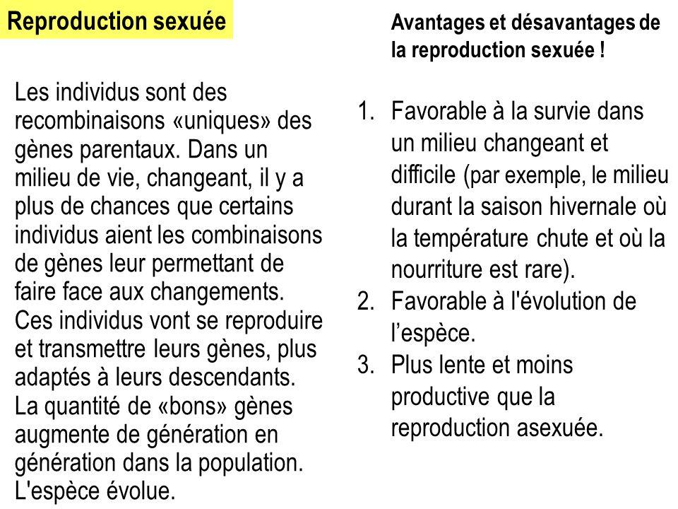 Avantages et désavantages de la reproduction sexuée ! 1.Favorable à la survie dans un milieu changeant et difficile ( par exemple, le milieu durant la