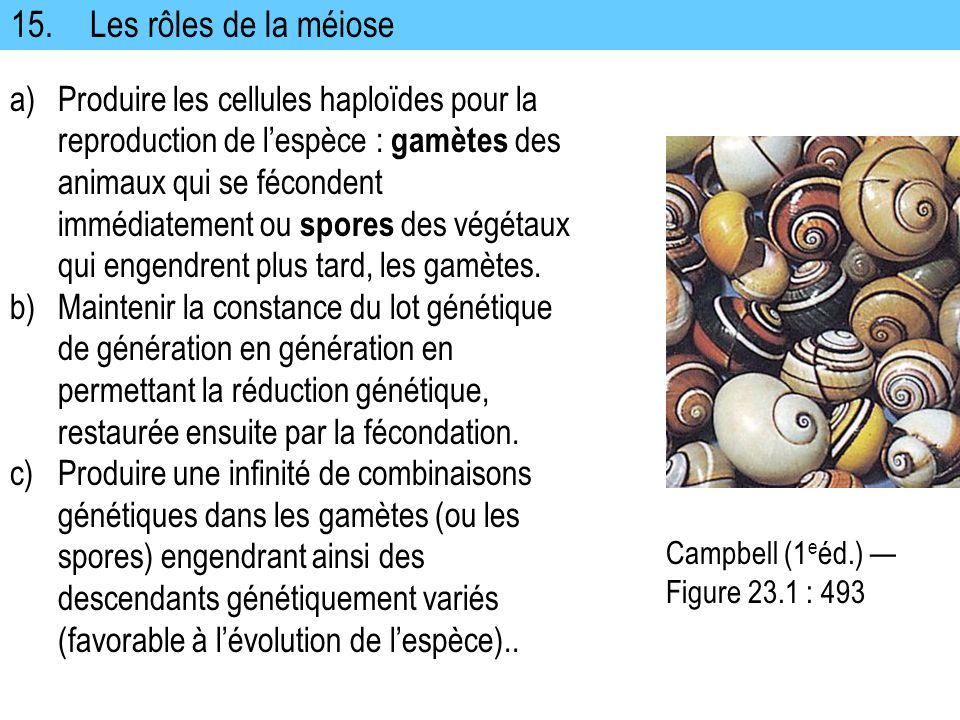 15.Les rôles de la méiose a)Produire les cellules haploïdes pour la reproduction de lespèce : gamètes des animaux qui se fécondent immédiatement ou sp