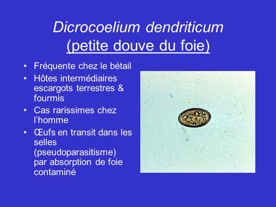 Dicrocoelium dendriticum (petite douve du foie) Fréquente chez le bétail Hôtes intermédiaires escargots terrestres & fourmis Cas rarissimes chez lhomme Œufs en transit dans les selles (pseudoparasitisme) par absorption de foie contaminé