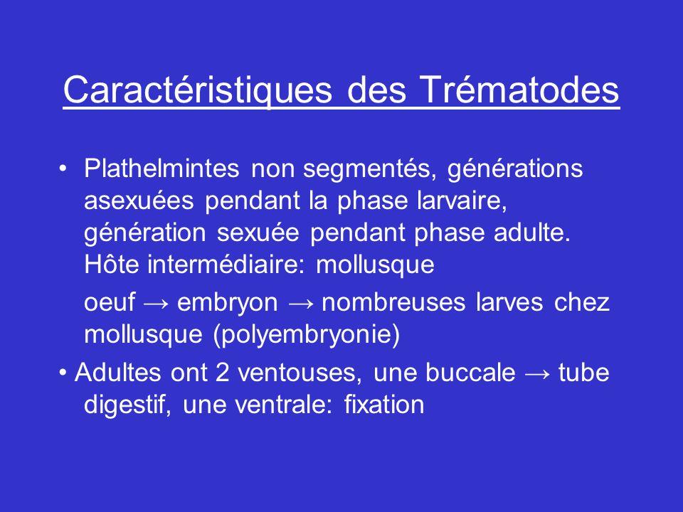 Caractéristiques des Trématodes Plathelmintes non segmentés, générations asexuées pendant la phase larvaire, génération sexuée pendant phase adulte.