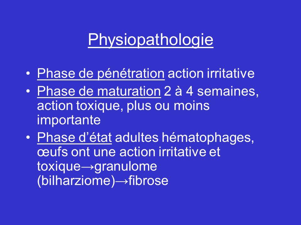 Physiopathologie Phase de pénétration action irritative Phase de maturation 2 à 4 semaines, action toxique, plus ou moins importante Phase détat adultes hématophages, œufs ont une action irritative et toxiquegranulome (bilharziome)fibrose