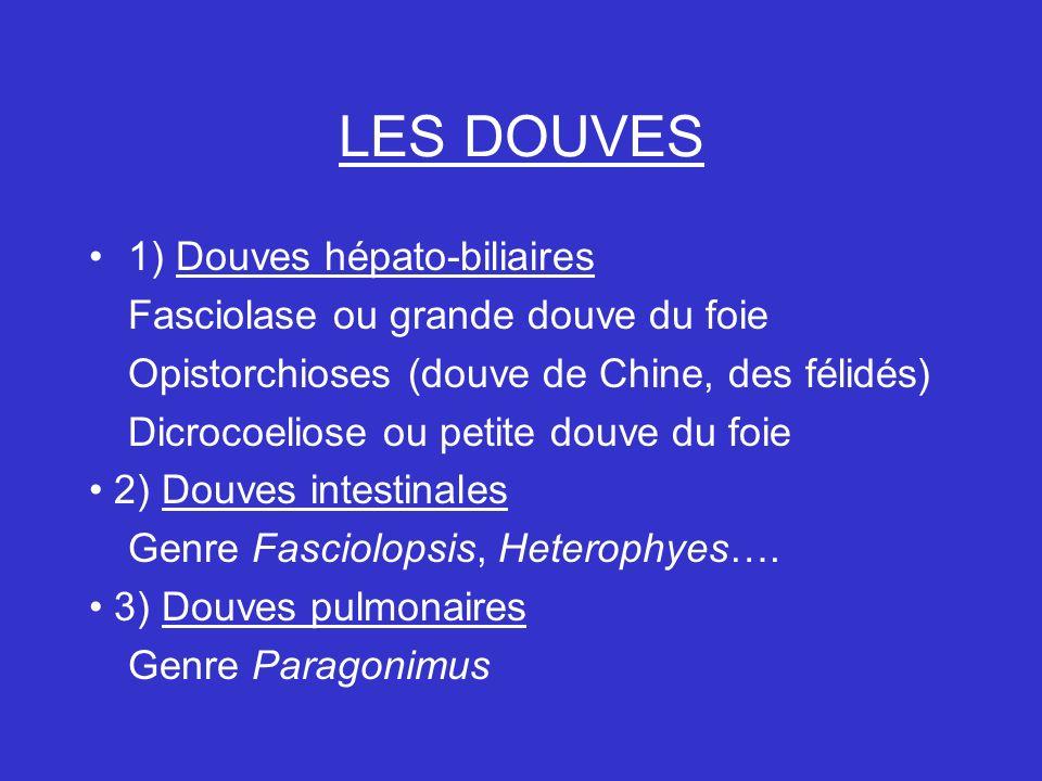 LES DOUVES 1) Douves hépato-biliaires Fasciolase ou grande douve du foie Opistorchioses (douve de Chine, des félidés) Dicrocoeliose ou petite douve du foie 2) Douves intestinales Genre Fasciolopsis, Heterophyes….