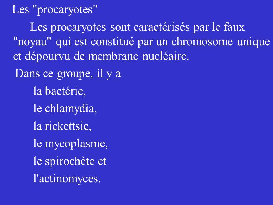 Les procaryotes Les procaryotes sont caractérisés par le faux noyau qui est constitué par un chromosome unique et dépourvu de membrane nucléaire.