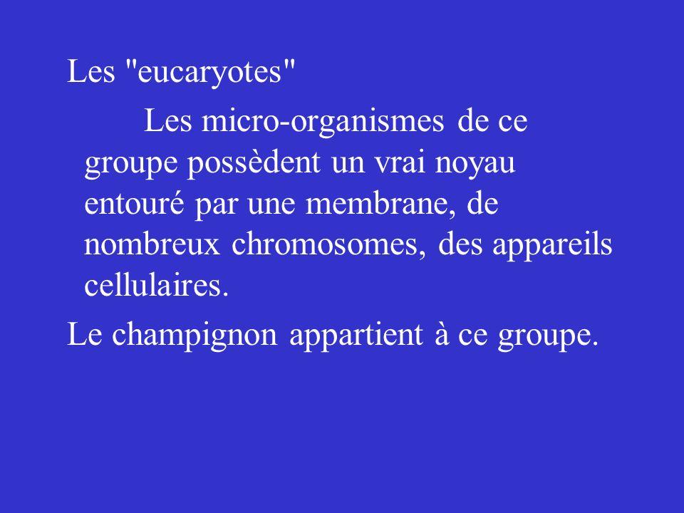 Les micro-organismes non- cellulaires Ce sont des microbes dépourvus de structure cellulaire classique.