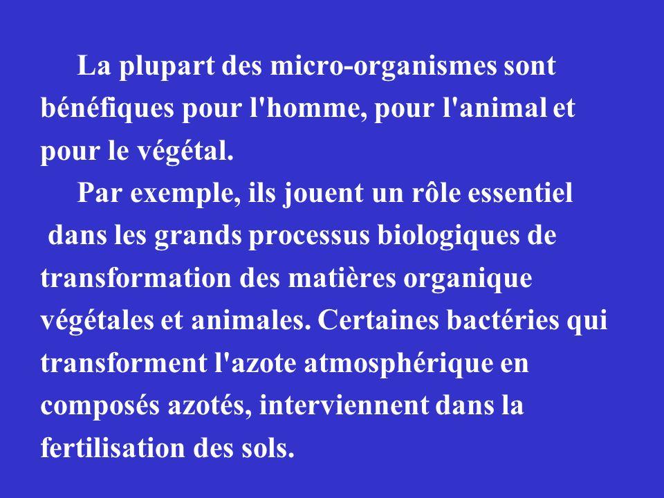 La plupart des micro-organismes sont bénéfiques pour l'homme, pour l'animal et pour le végétal. Par exemple, ils jouent un rôle essentiel dans les gra