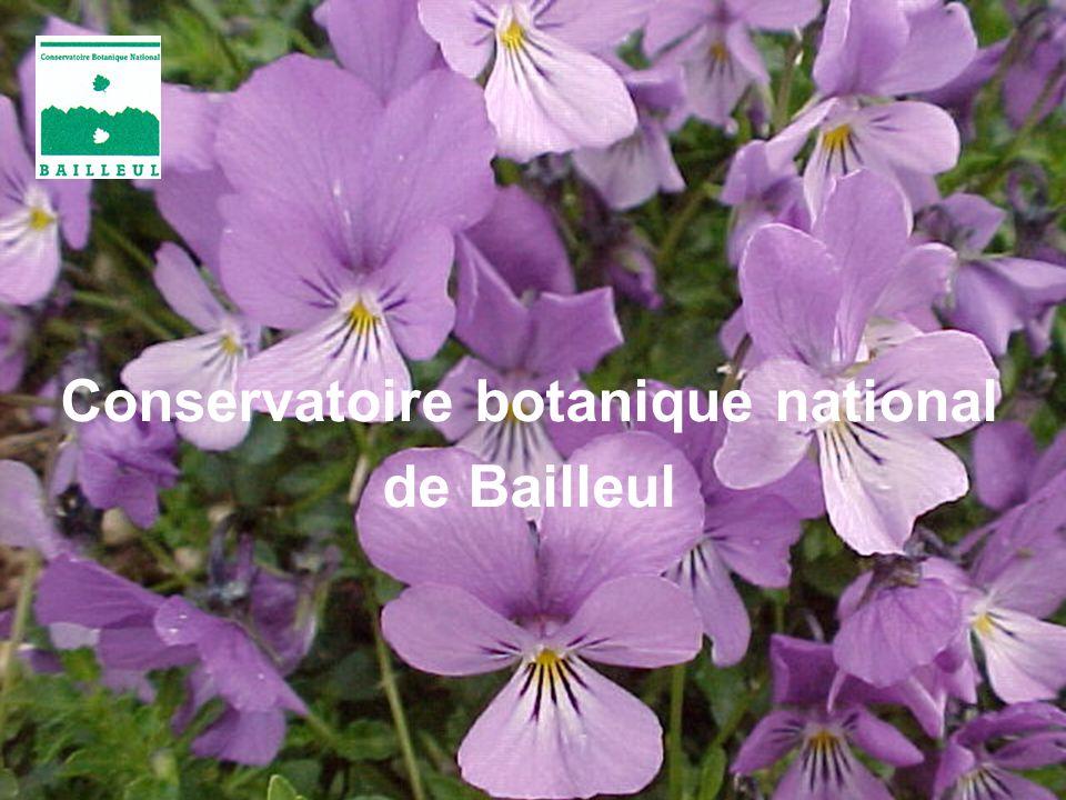 1 « Flore sauvage » 3 La plante, organisme vivant 2 Milieux de vie 4 LHomme et les plantes Protéger la biodiversité