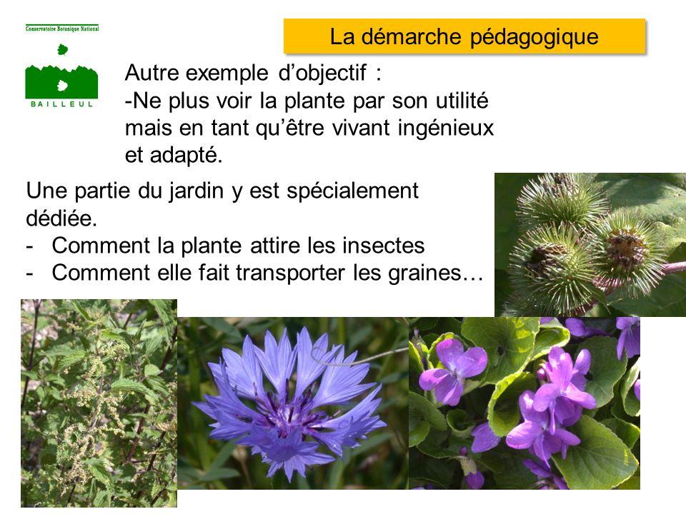Autre exemple dobjectif : -Ne plus voir la plante par son utilité mais en tant quêtre vivant ingénieux et adapté. Une partie du jardin y est spécialem