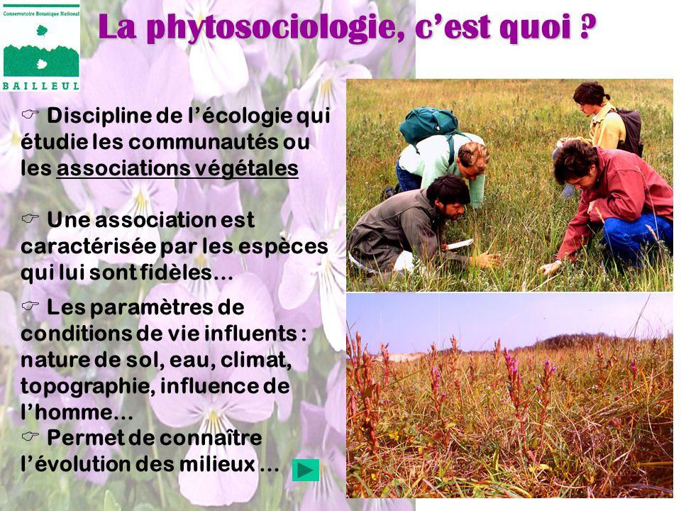 La phytosociologie, cest quoi ? Discipline de lécologie qui étudie les communautés ou les associations végétales Une association est caractérisée par