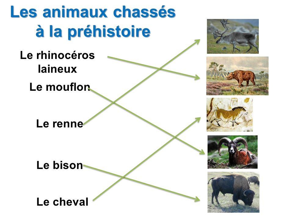 Les animaux chassés à la préhistoire Le rhinocéros laineux Le mouflon Le renne Le bison Le cheval