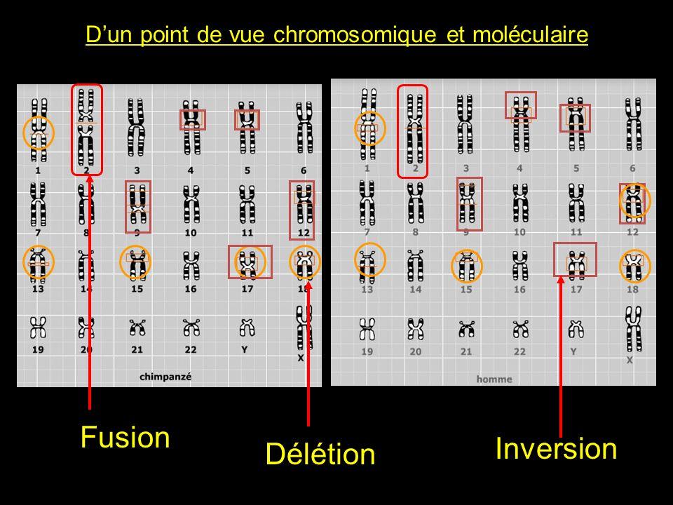 Dun point de vue chromosomique et moléculaire Fusion Délétion Inversion