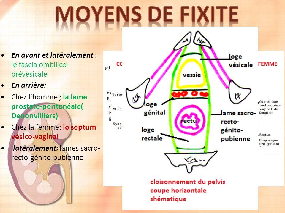 En avant et latéralement : le fascia ombilico- prévésicale En arrière: Chez lhomme ; la lame prostato-péritonéale( Denonvilliers) Chez la femme: le septum vésico-vaginal latéralement: lames sacro- recto-génito-pubienne