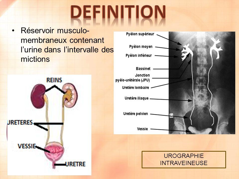 Réservoir musculo- membraneux contenant lurine dans lintervalle des mictions UROGRAPHIE INTRAVEINEUSE