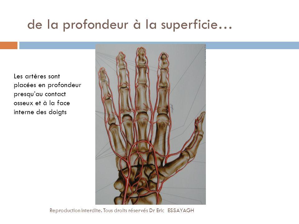 de la profondeur à la superficie… Les artères sont placées en profondeur presquau contact osseux et à la face interne des doigts Reproduction interdit