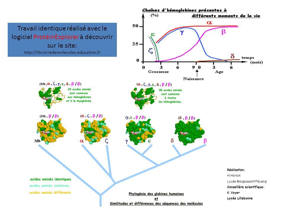 Travail identique réalisé avec le logiciel ProtéinExplorer à découvrir sur le site: http://librairiedemolecules.education.fr Réalisation: H.Horion Lyc