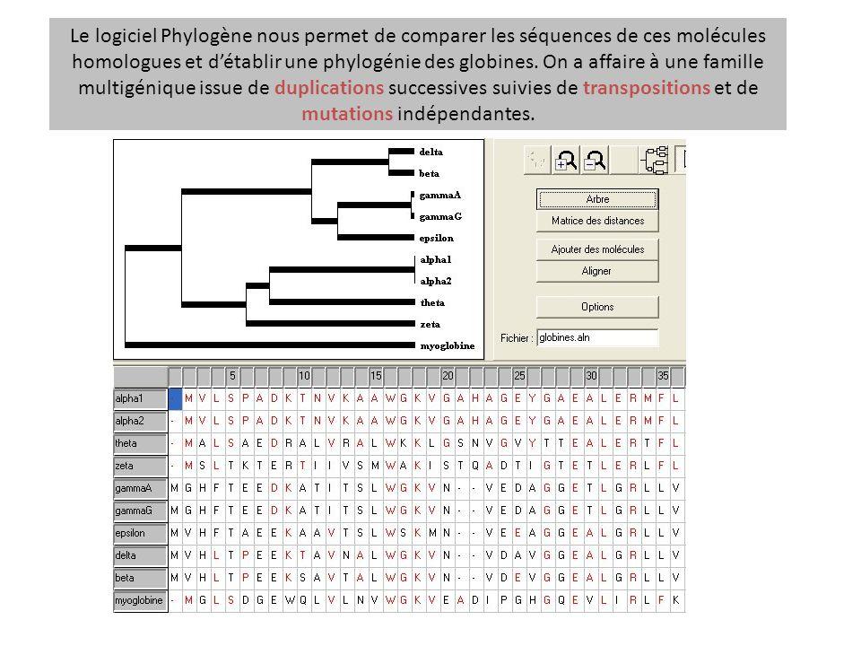 Le logiciel Phylogène nous permet de comparer les séquences de ces molécules homologues et détablir une phylogénie des globines. On a affaire à une fa