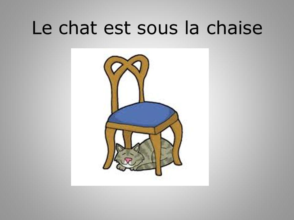 Le chat est sous la chaise