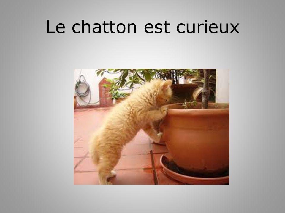 Le chatton est curieux