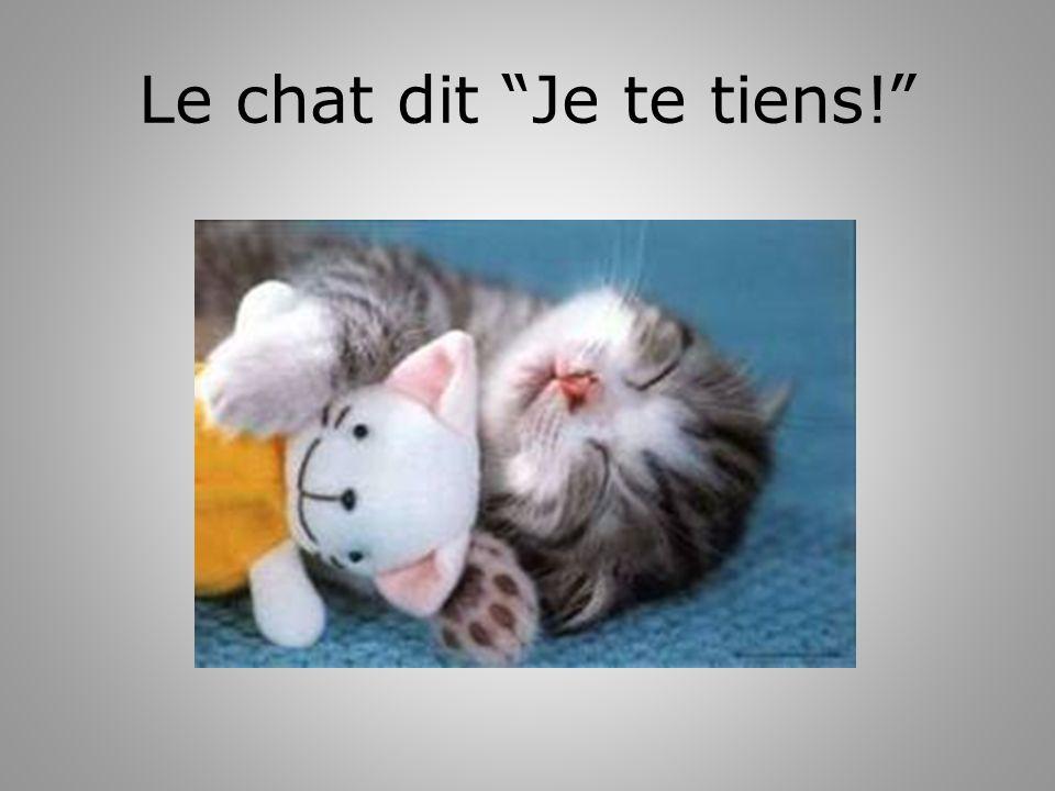 Le chat dit Je te tiens!