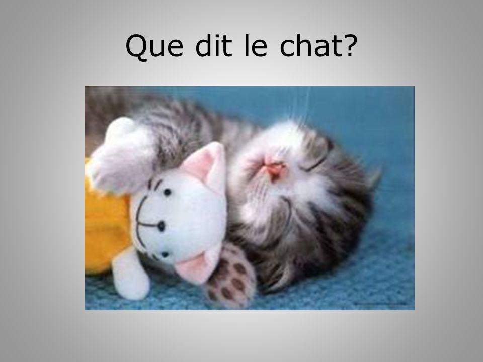 Que dit le chat