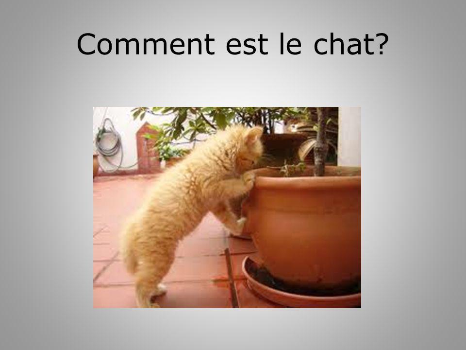 Comment est le chat?