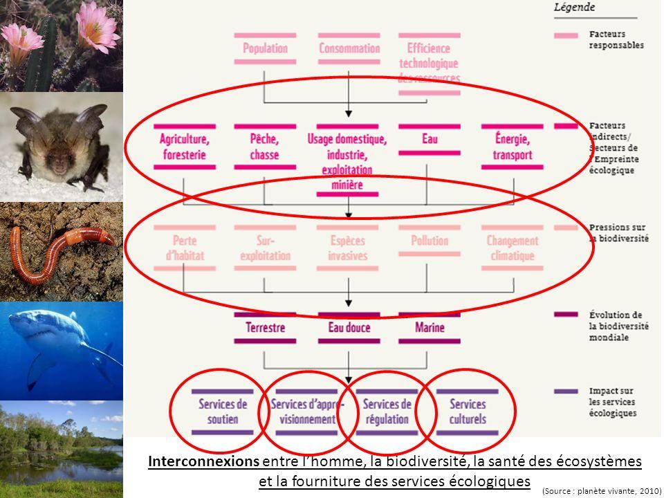 Interconnexions entre lhomme, la biodiversité, la santé des écosystèmes et la fourniture des services écologiques (Source : planète vivante, 2010)