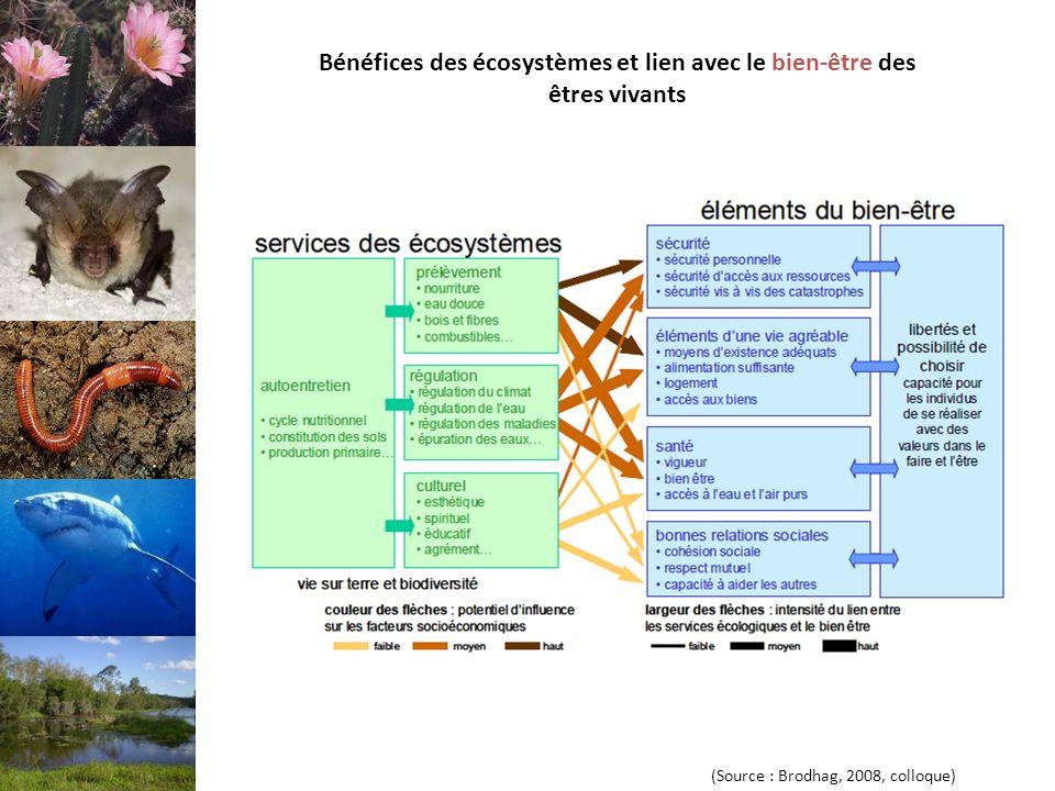 Bénéfices des écosystèmes et lien avec le bien-être des êtres vivants (Source : Brodhag, 2008, colloque)