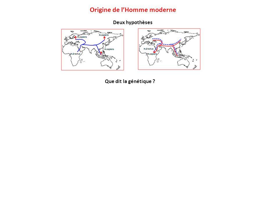 Deux hypothèses Origine de lHomme moderne Que dit la génétique ?