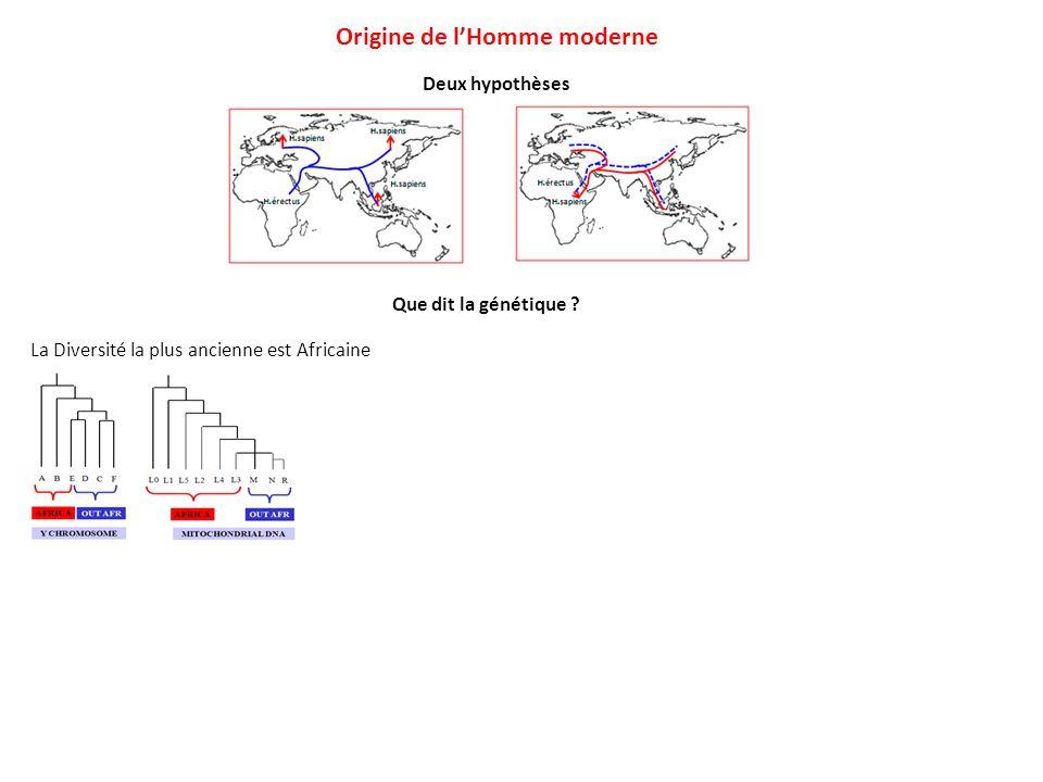 Deux hypothèses Origine de lHomme moderne Que dit la génétique ? La Diversité la plus ancienne est Africaine